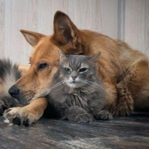 animal-welfare-public-relations-300x300